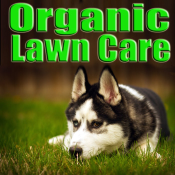 Top half of picture says Organic Lawn Care bottom half shows a Husky lying in the grass.